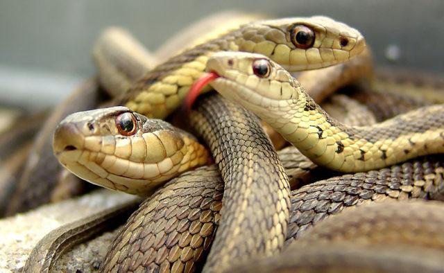 секс змей