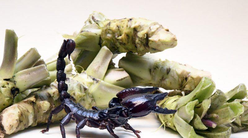 васаби яд скорпиона