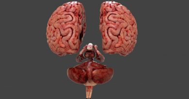 Еще 10 фактов о мозге