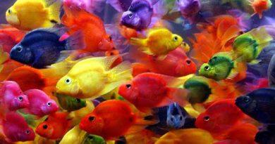 рыбы попугаи