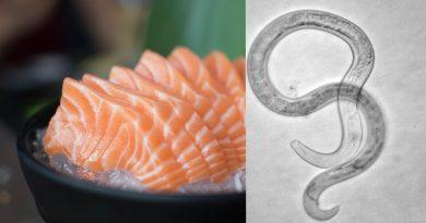 За последние 40 лет «суши паразитов» стало больше в 283 раза