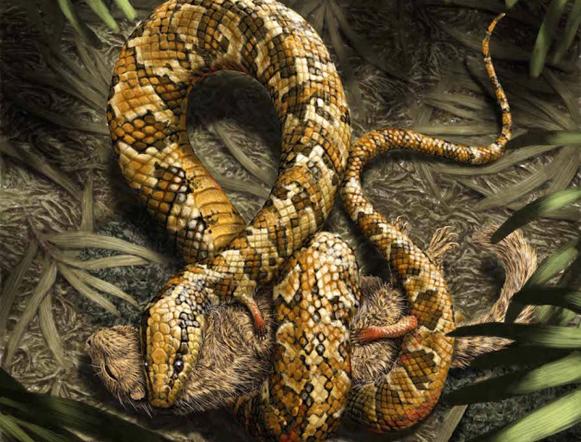 четвероногая змея