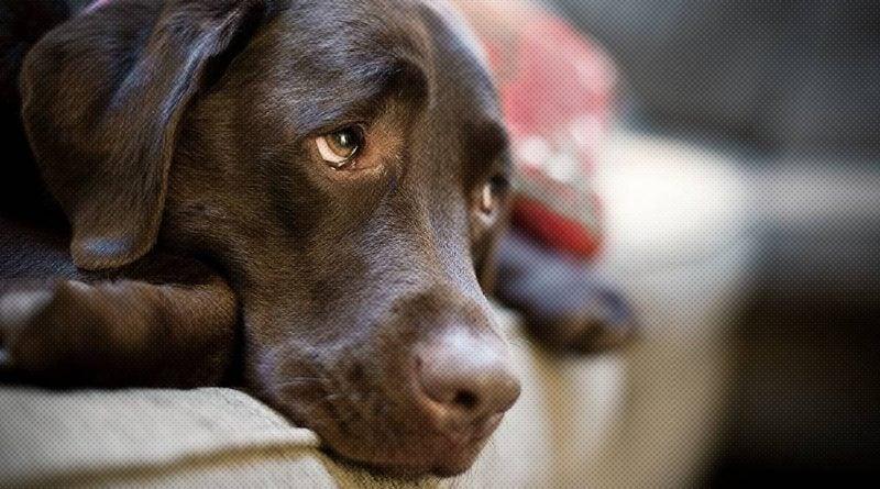 Собаки у нас на поводке, благодаря одной очаровательной черте