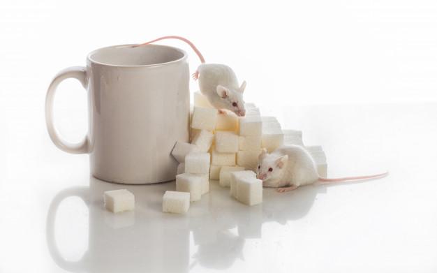 Удаление гена предотвращает диабет 1 типа у мышей путем маскировки инсулин-продуцирующих клеток