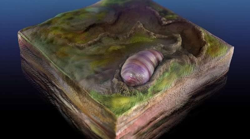 Предок всех животных найден в австралийских окаменелостях