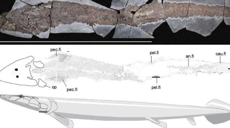 Древняя рыба раскрывает эволюционное происхождение человеческой руки