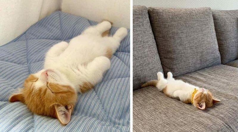 Новый метод сна