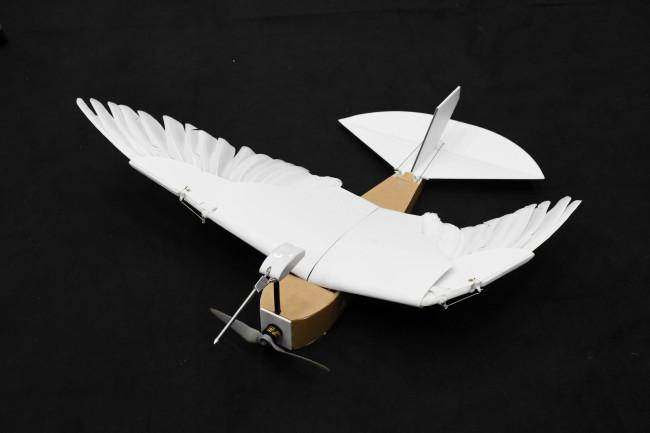 С помощью голубиных перьев этот робот поднимается в небо