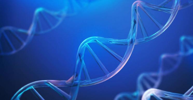 Новый инструментарий может восстанавливать разрывы ДНК, связанные со старением и раком