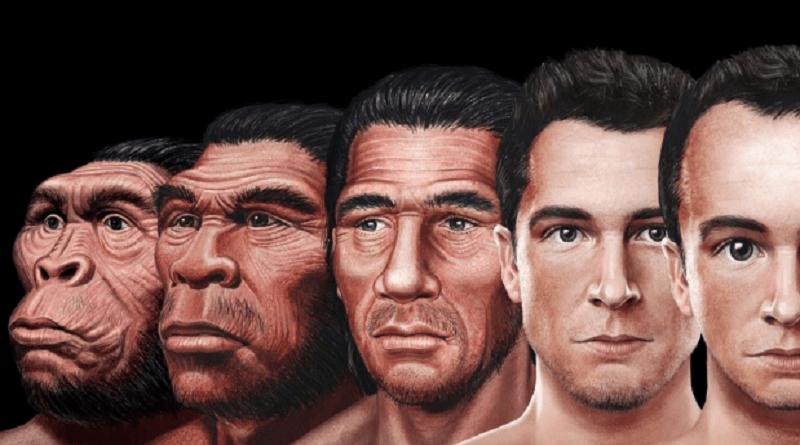 Анатомо-физиологические доказательства эволюции