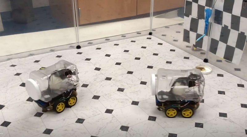 обучение крыс водить маленькие машины помогает им расслабиться