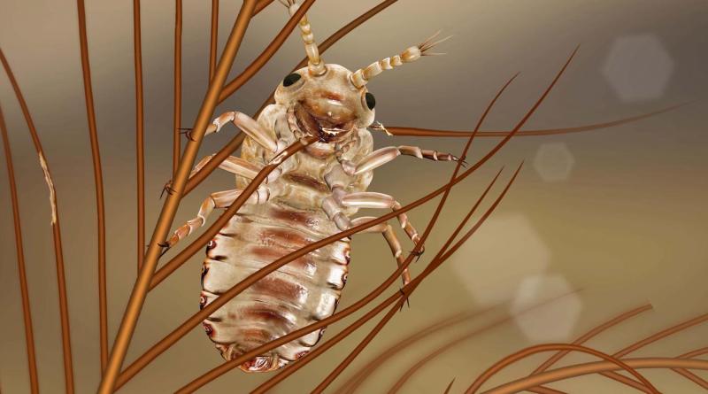 Эти древние насекомые ели перья динозавров в меловой период.