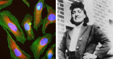 Бессмертная женщина: Генриетта Лэкс и клетки HeLa