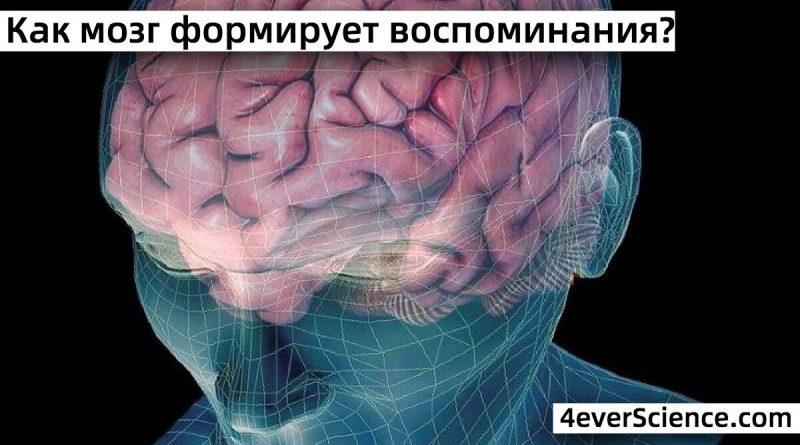 Как мозг формирует воспоминания?