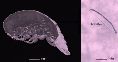 Новые виды с пластиком в теле обнаружены на дне океана