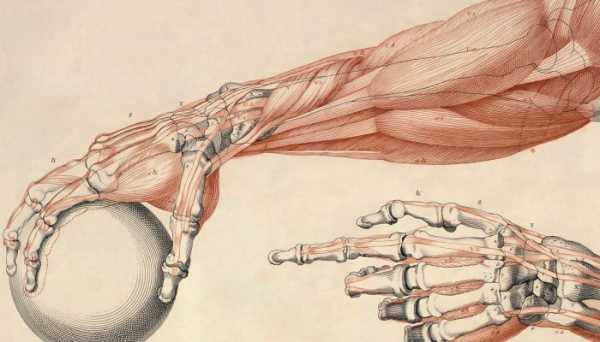 восприятие руки