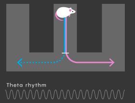 нейроны манипулируют возможным будущим