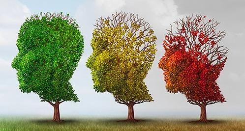Грамотность может защитить мозг от деменции