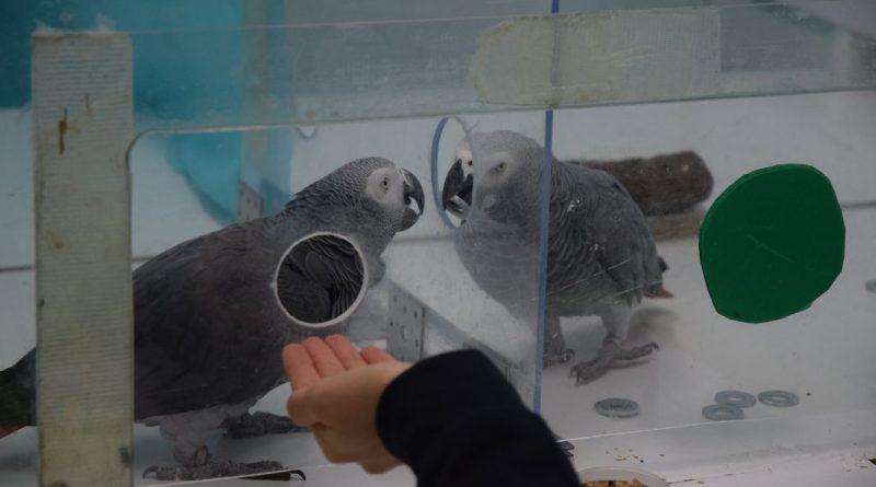 Попугаи делятся валютой, чтобы помочь своим друзьям покупать еду
