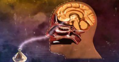 Запахи изменяют то, как память обрабатывается в мозге