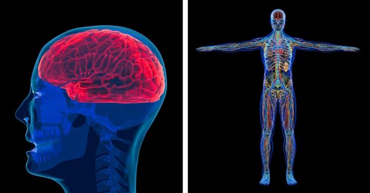 8 исследований, показывающих, как мозг и тело стареют на разных скоростях