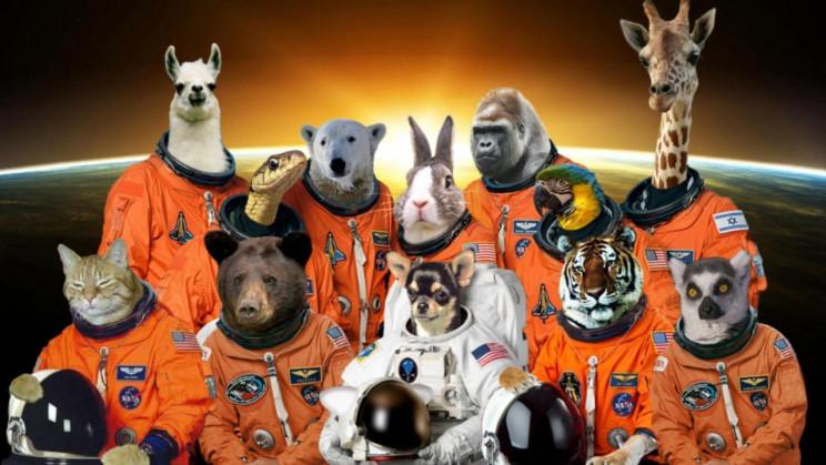 15 животных, которые проложили путь человечеству к звездам