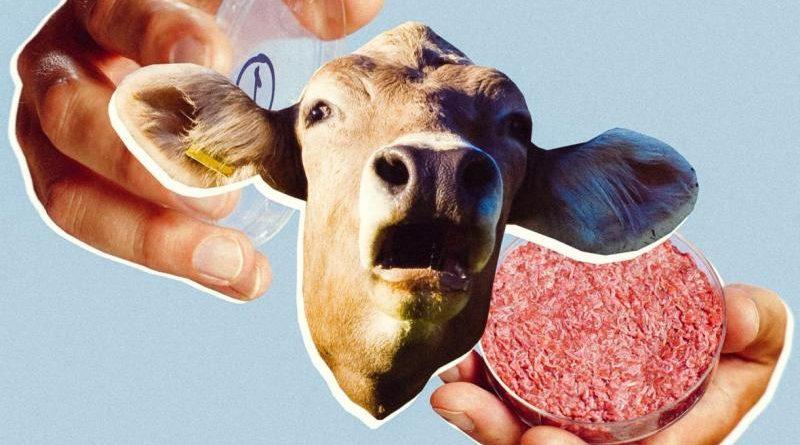 Инновационный процесс выращивания мяса на основе клеток