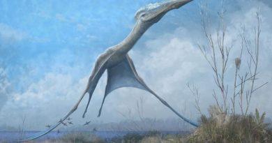Птерозавры могли бы научить нас лучшему полету