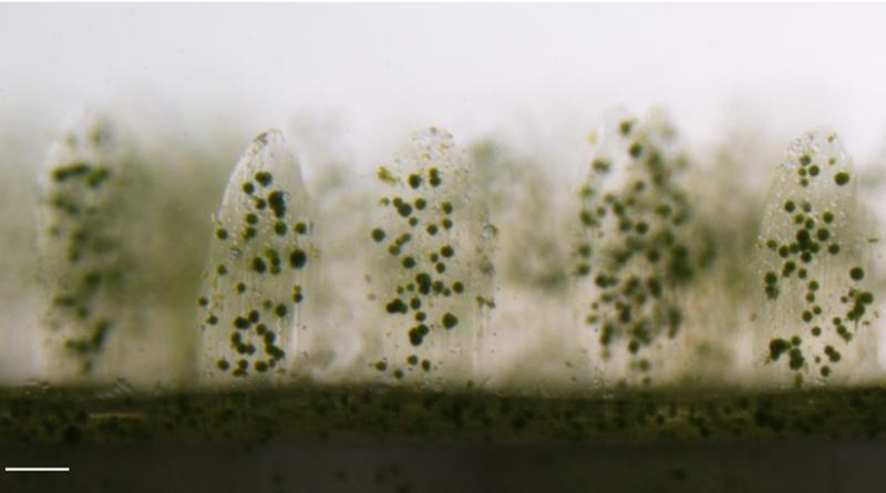 Коралл, напечатанный на 3D принтере, успешно выращивает водоросли