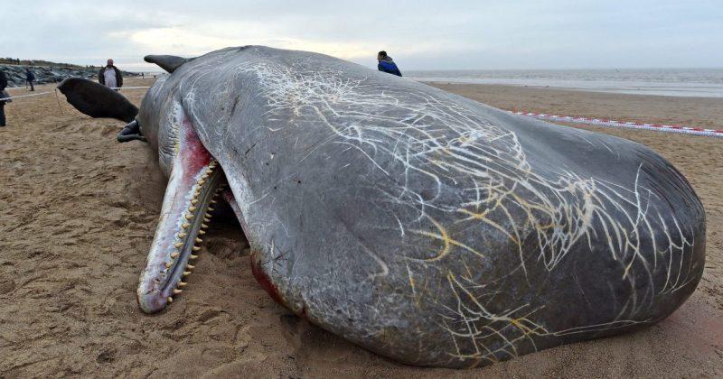 Военные убивают китов