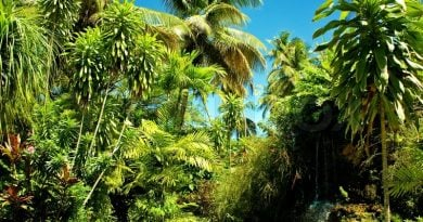 Тропические деревья - «капсулы времени» человеческой культуры