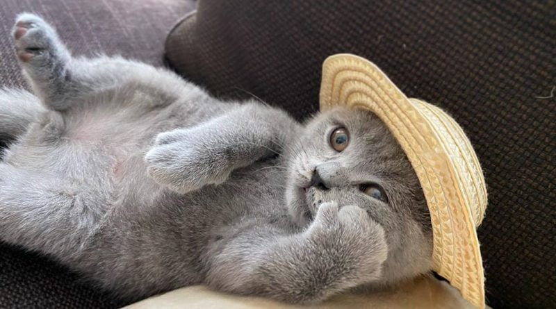 Домашние кошки отличают свои имена от других слов