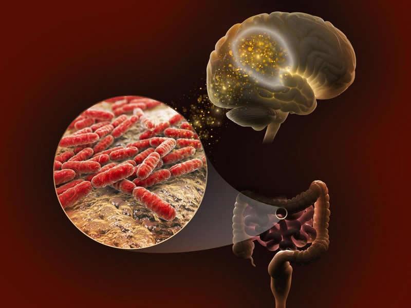 Иллюстрация связи между мозгом и микробами в кишечнике. Изображение: Натан Джонсон