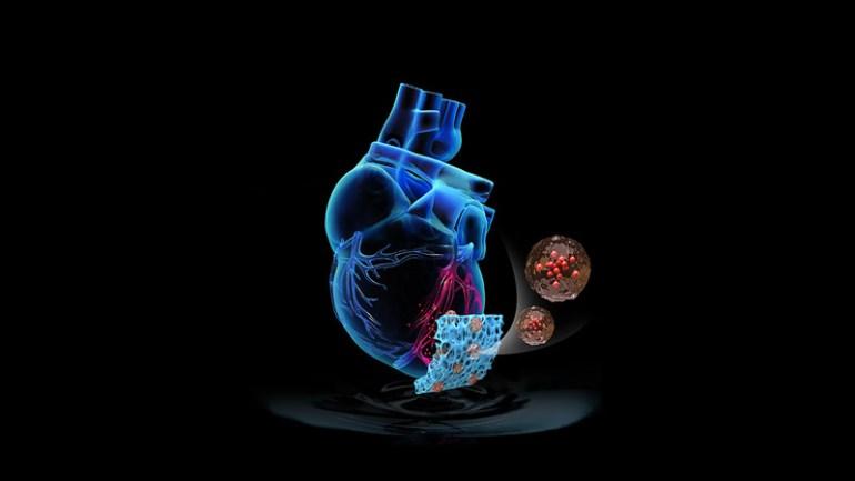 Сердечный пластырь восстанавливает повреждения от сердечного приступа