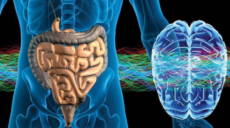 Ученые исследуют связи между генетикой, кишечным микробиомом и памятью