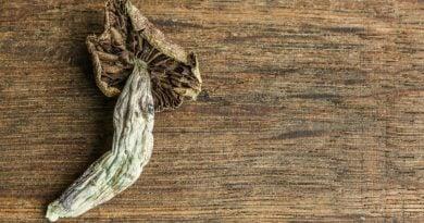 Ученые пытаются создать волшебный гриб, который никогда не приводит к бэд-трипу