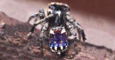 Обнаружен паук, напоминающий «Звездную ночь» Ван Гога