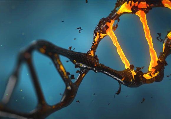 ДНК нельзя рассматривать как образец жизни. В лучшем случае это перемешанный список ингредиентов, который по-разному используется разными клетками в разное время