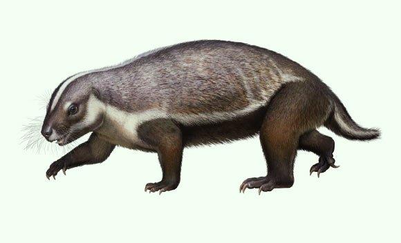 Палеонтологи нашли окаменелость странного млекопитающего возрастом 66 миллионов лет