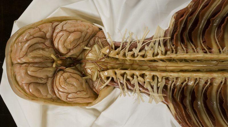 Повреждение спинного мозга увеличивает риск психических расстройств