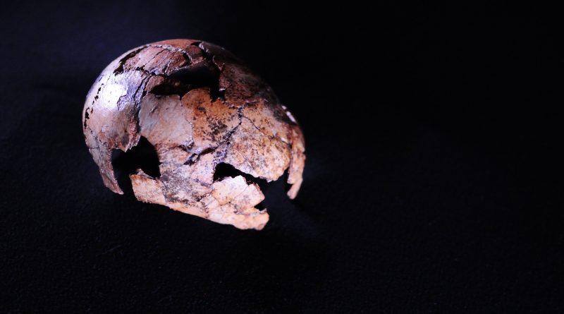 Наш предок, человек прямоходящий старше, чем мы думали