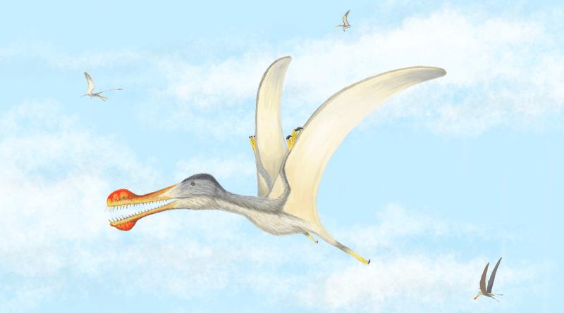 В Марокко обнаружены четыре новых вида доисторических летающих рептилий