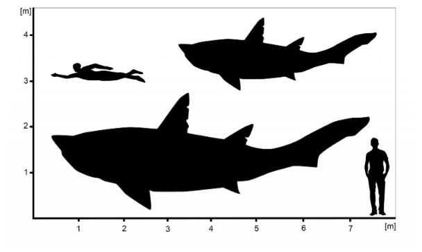 Гигантская юная акула подросток эпохи динозавров