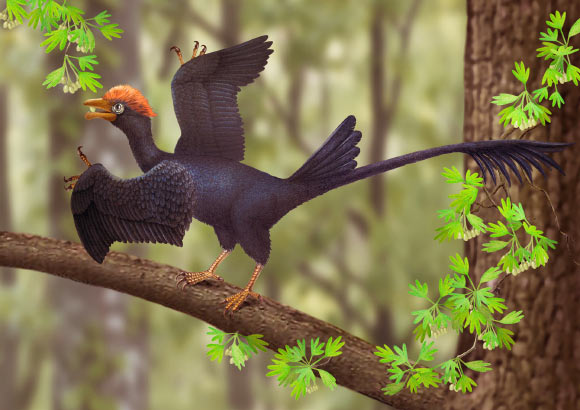 Найдено ископаемое древней длиннохвостой птицы, жившей 120 миллионов лет назад