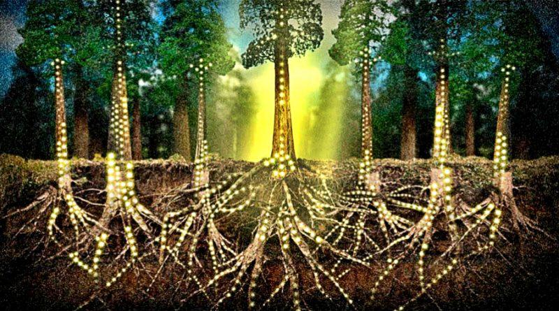 Некоторые виды зеленых растений получают углерод из корневых грибов