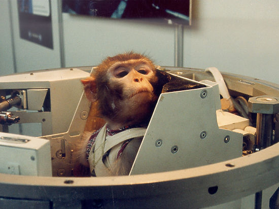 Ученые контролируют мозг обезьян с помощью ультразвуковых волн