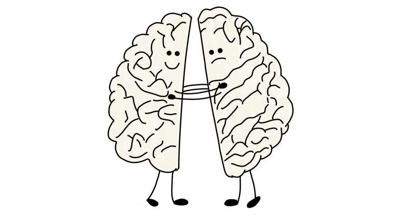 У людей с аутизмом мозг более симметричен