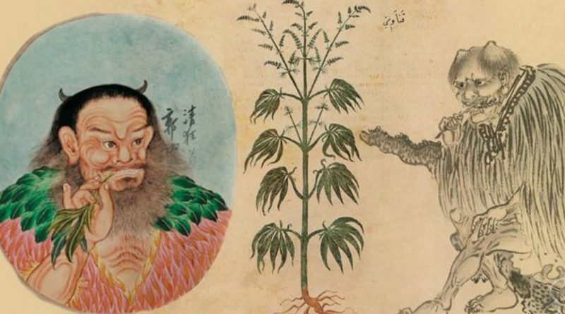 Как древние использовали каннабис - 8000 лет назад