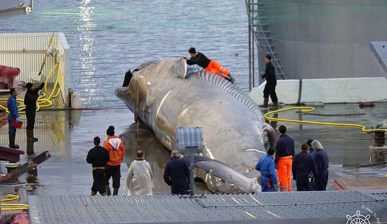 Исландия остановила китобойный промысел в этом году