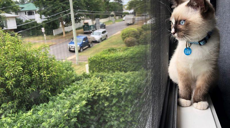 Каждый бродячий кот убивает в среднем 110 местных животных в год